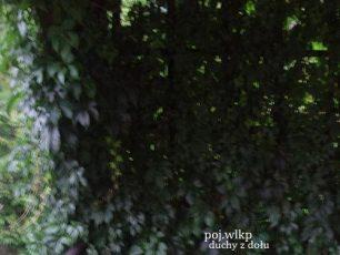 poj.wlkp - Pokój w Deszczu